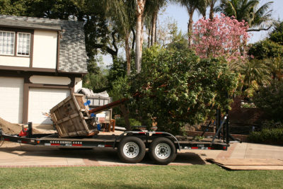 Large Tree Installation