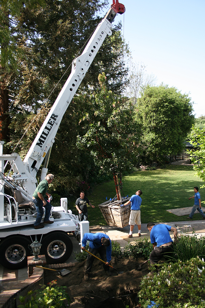 Large Tree Installation